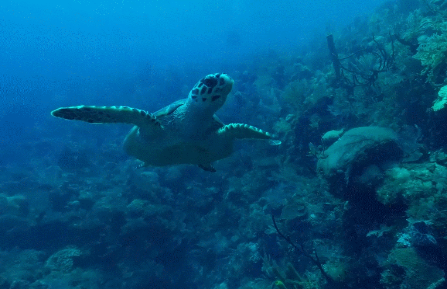 underwater_03-2